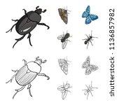 arthropods insect beetle  moth  ... | Shutterstock .eps vector #1136857982