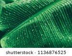 water drops on tropical banana... | Shutterstock . vector #1136876525