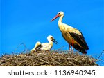 Stork nest on blue sky...