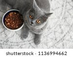 cute cat lying near bowl with... | Shutterstock . vector #1136994662
