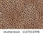 leopard spotted beige brown fur ...   Shutterstock . vector #1137013598