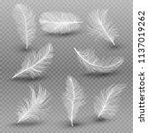 set of isolated white fluffy...   Shutterstock .eps vector #1137019262