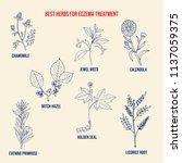 best medicinal herbs for eczema.... | Shutterstock .eps vector #1137059375