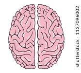 human brain on white background....   Shutterstock .eps vector #1137096002