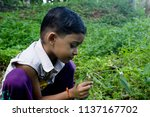 Small photo of Kottayam, Kerala/India- August 21, 2016: Cute little boy child collects Leucas zeylanica flowers, commonly known as Ceylon slitwort or Thumba for Onam festival