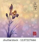 iris flower and sunrise.... | Shutterstock .eps vector #1137227666