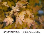 soft autumn background with... | Shutterstock . vector #1137306182