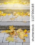 landscape with beautiful autumn ... | Shutterstock . vector #1137306185