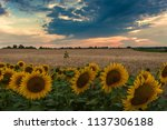 majestic sunset on agricultural ... | Shutterstock . vector #1137306188