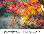 soft autumn background with... | Shutterstock . vector #1137306215