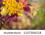 soft autumn background with... | Shutterstock . vector #1137306218