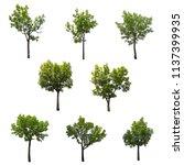 Set Trees Isolated A White - Fine Art prints