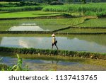 pu luong nature reserve  thanh... | Shutterstock . vector #1137413765