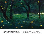 bokeh light of firefly flying... | Shutterstock . vector #1137422798
