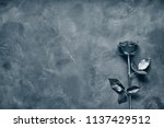 black rose lies on a dark stone ... | Shutterstock . vector #1137429512
