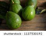 avocado fruits fresh from the... | Shutterstock . vector #1137530192