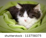 Cute Kitten Sleeping In Green ...