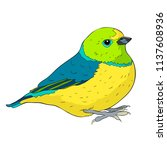 bird green organist tanager... | Shutterstock .eps vector #1137608936