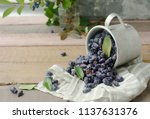 honeysuckle berry in metal cup... | Shutterstock . vector #1137631376