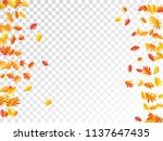 oak and maple leaf abstract... | Shutterstock .eps vector #1137647435