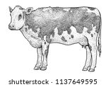 cow illustration  drawing ... | Shutterstock .eps vector #1137649595