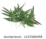 bamboo leaves isolated on over... | Shutterstock . vector #1137680498