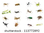 set  insects isolated on white... | Shutterstock . vector #113772892