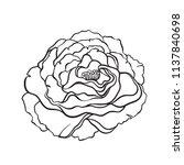 rose flower in tattoo style ... | Shutterstock .eps vector #1137840698