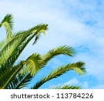 Palm branches against blue sky - stock photo