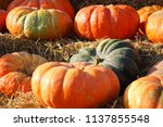 fall pumpkin patch  | Shutterstock . vector #1137855548
