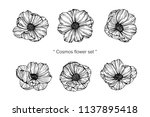 collection set of cosmos flower ... | Shutterstock .eps vector #1137895418
