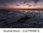 seaweed on the beach at dusk... | Shutterstock . vector #1137990872