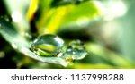 Dew Drops On A Green Leaf...