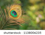 Peacock Feather On A Green...