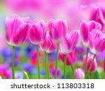 pink tulip with bokeh | Shutterstock . vector #113803318