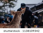 Small photo of Japanese man staring down a young deer in the rain