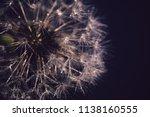 close up photo of dandelion... | Shutterstock . vector #1138160555