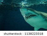 close up of a sand shark shot... | Shutterstock . vector #1138223318