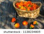 marigold  calendula officinalis  | Shutterstock . vector #1138234805
