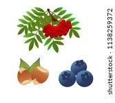 rowan berries blueberries and...   Shutterstock .eps vector #1138259372