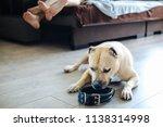 american staffordshire terrier...   Shutterstock . vector #1138314998