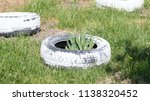 homemade flowerbed from a tire  ...   Shutterstock . vector #1138320452