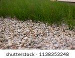 field horsetail or common... | Shutterstock . vector #1138353248