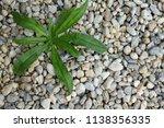 The Weeds Between The Stones In ...