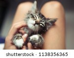 Stock photo cute little kitten sleeps in its owner s lap enjoying and purring 1138356365