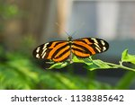 An Isabella Longwing Butterfly At The Chattanooga Aquarium In Tennessee