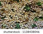 lemongrass is a fragrant... | Shutterstock . vector #1138438046