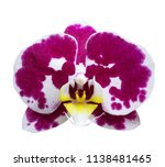 orchid isolated on white... | Shutterstock . vector #1138481465