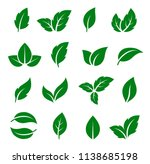 natural set of isolated green... | Shutterstock . vector #1138685198