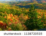 fall foliage in the white... | Shutterstock . vector #1138720535
